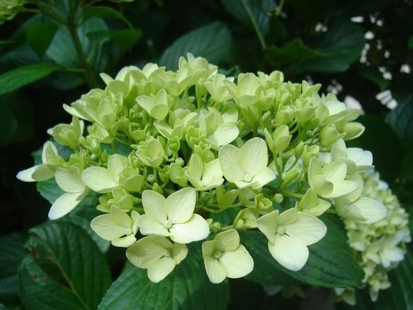 Flowers from Darjeeling